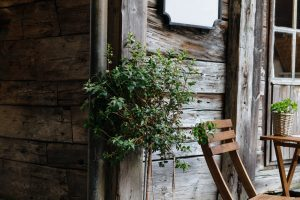 green leaf plant near brown wooden wall and brown wooden armless chair